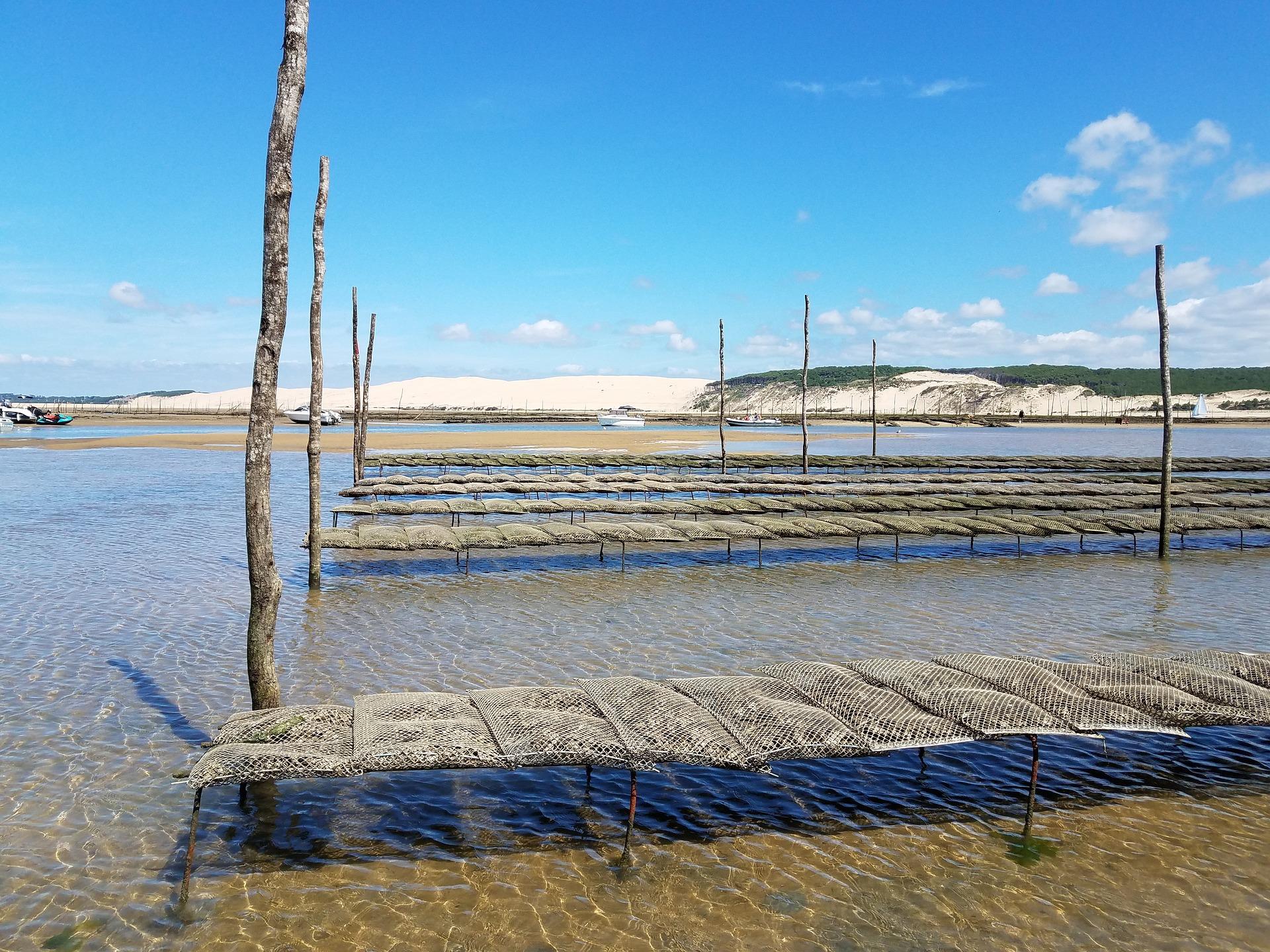 Bassin d'Arcachon, parc à huîtres