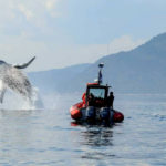 baleine-tadoussac-riviere-activite-croisiere-canada-travel-for-you