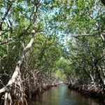 mangroves-everglades-floride-etats-unis-balade-alligator-travel-for-you