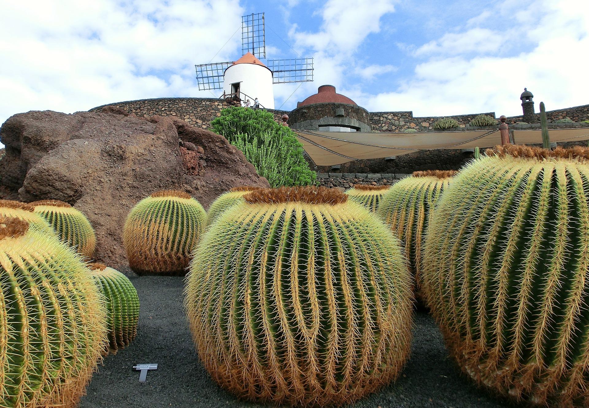 Tenerife ou Lanzarote, le Jardin de Cactus