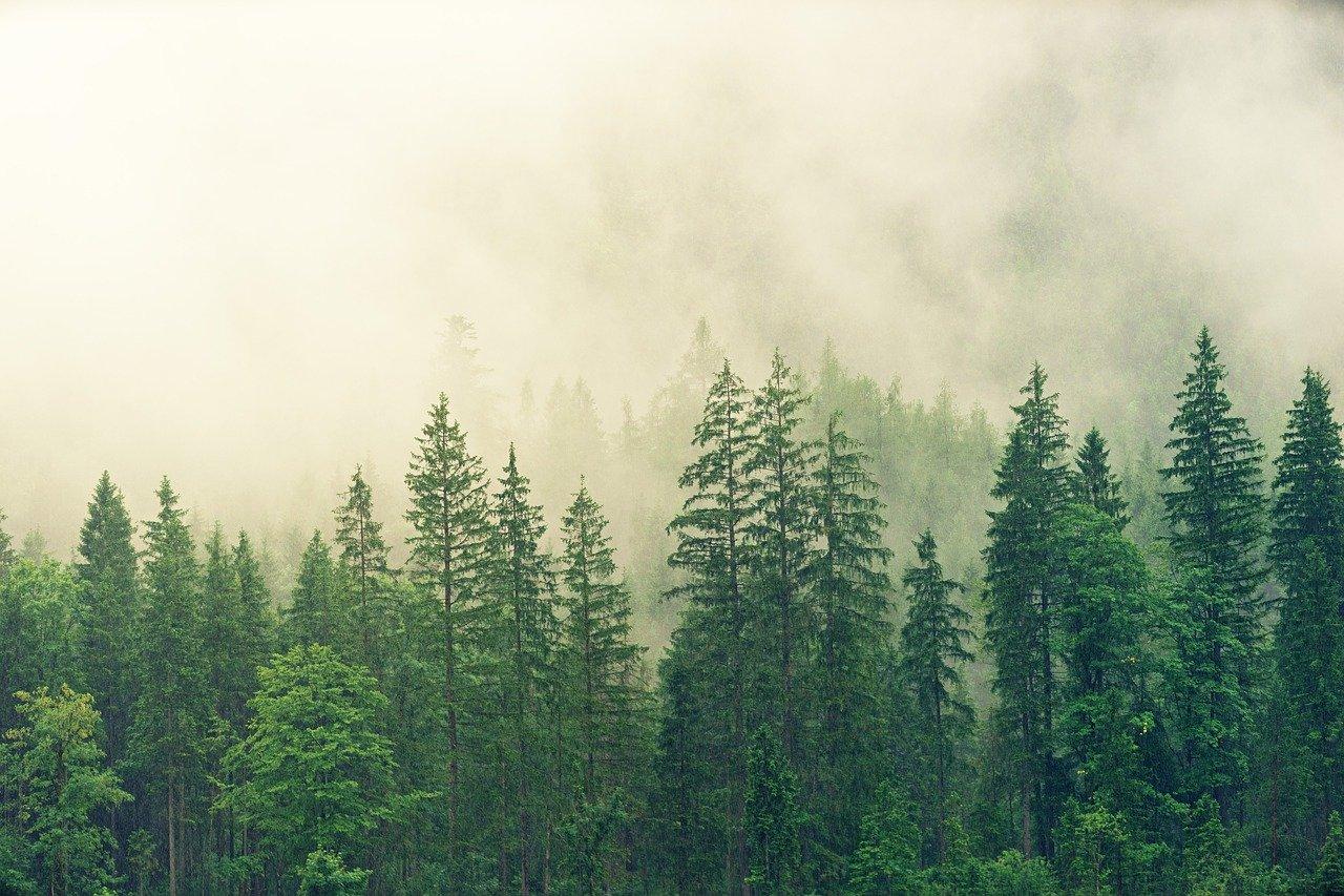 laponie finlandaise en été climat