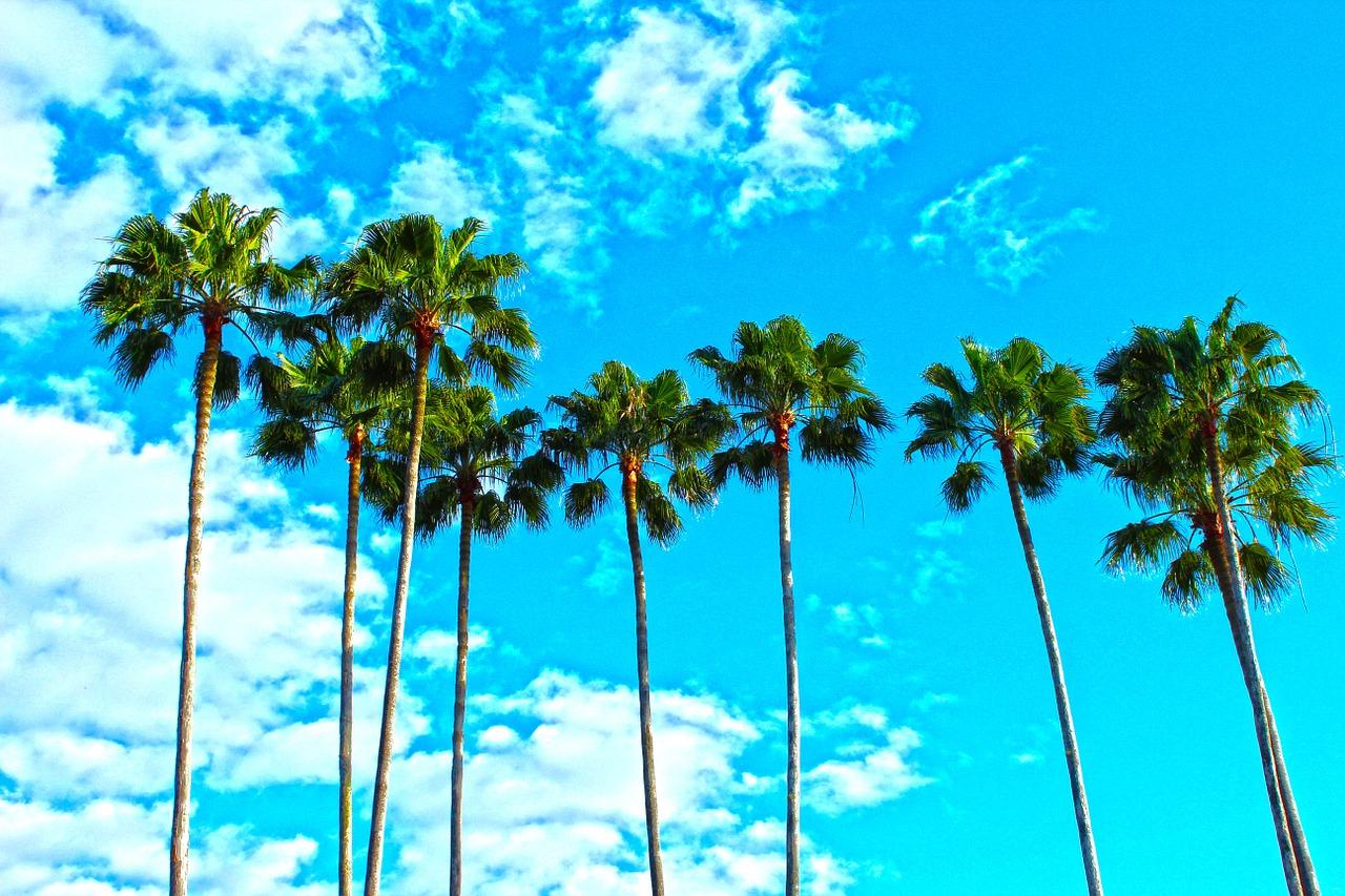 où partir au soleil en hiver floride palmiers